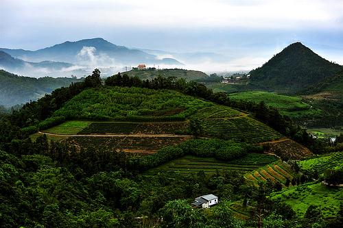 las propiedades del té azul - Wu Long