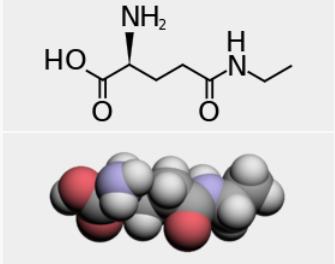 teanina molecula